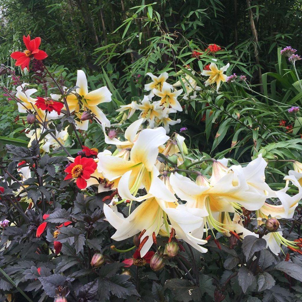Brockwell-park-flower-garden