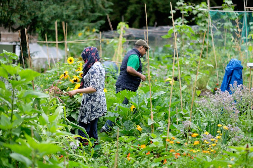 streatham-common-community-garden-image