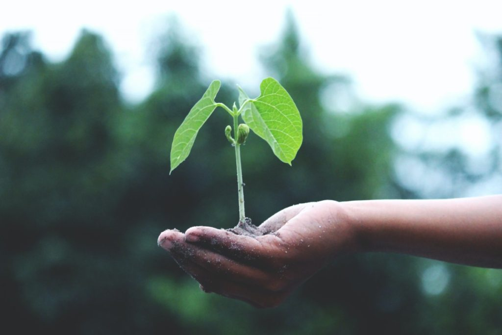 person holding bean plant, by Akil Mazumder